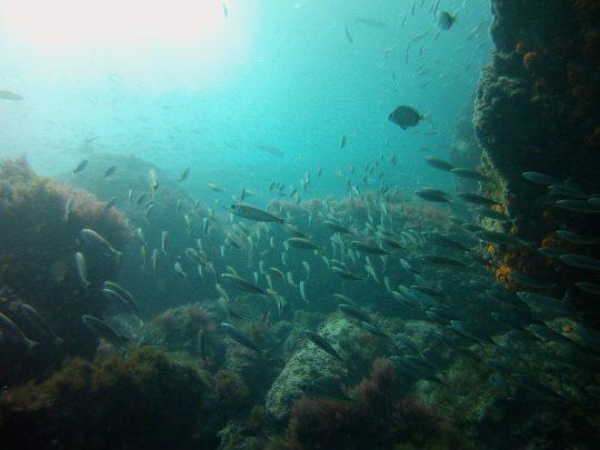 salidas de buceo, buceo en tarifa, buceo en Zahara de los atunes